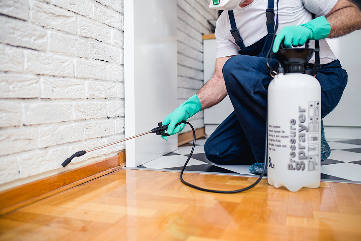 Avoid These Mistakes While Hiring Any Pest Control Company