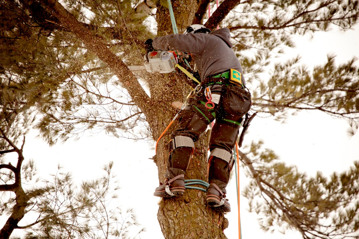 7 Tips For Marketing Your Tree Service Business