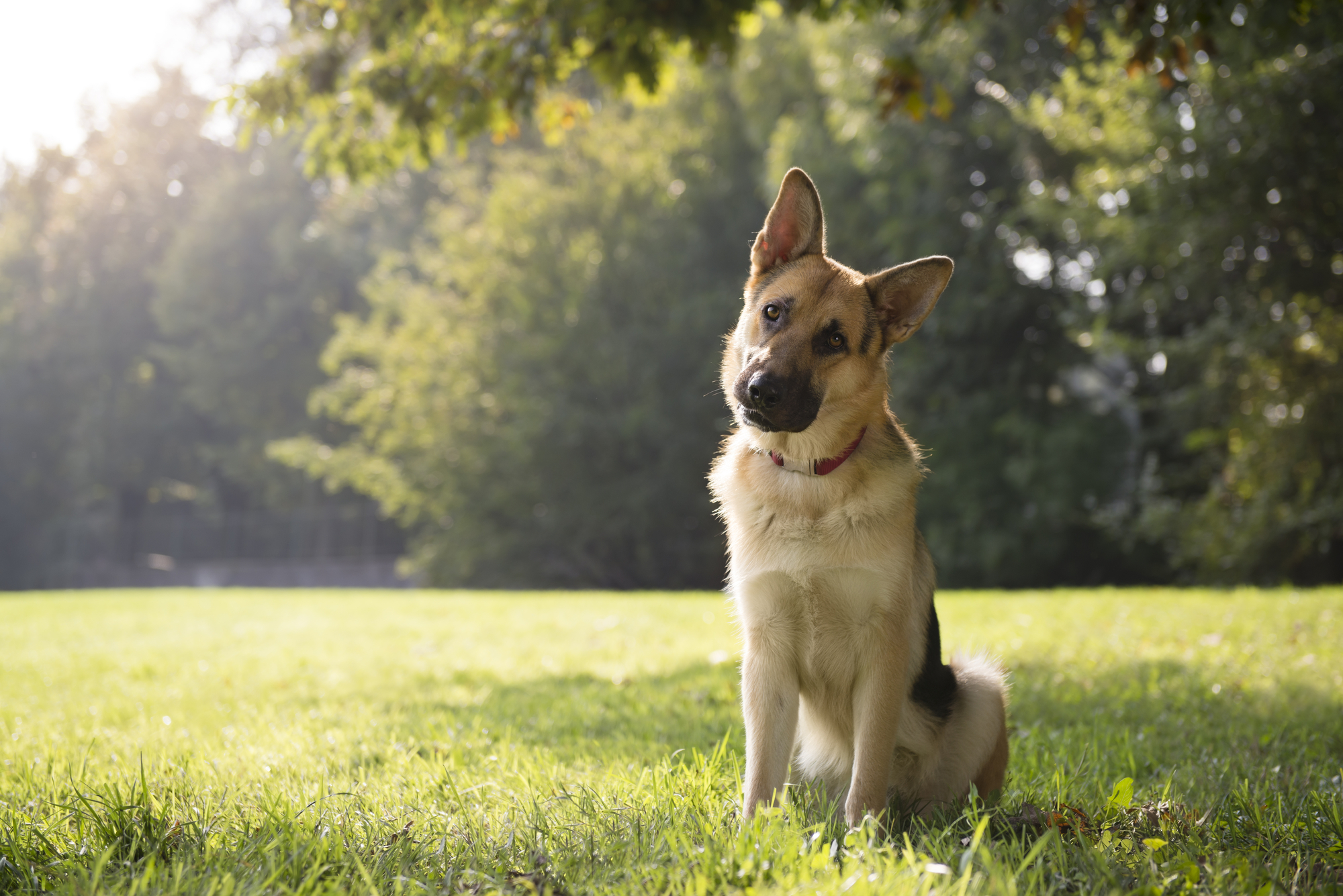 Keeping Your Pets Safe During Pest Control Treatments
